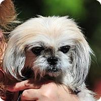 Adopt A Pet :: Jill - Vernonia, OR