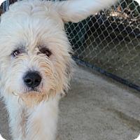 Adopt A Pet :: Loki - Harmony, Glocester, RI