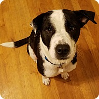 Adopt A Pet :: Daisy - Laingsburg, MI