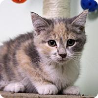 Adopt A Pet :: Teya - Murphysboro, IL