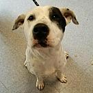 Adopt A Pet :: Dim (Courtesy Post)
