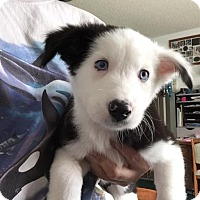 Adopt A Pet :: A Venusaur - Fresno, CA