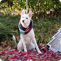 Adopt A Pet :: Nala - West Orange, NJ