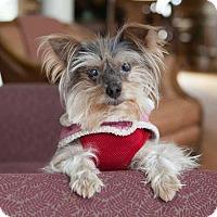 Adopt A Pet :: Sue - Matthews, NC