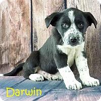Adopt A Pet :: Darwin - Griffin, GA