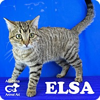 Adopt A Pet :: Elsa - Carencro, LA