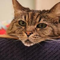 Adopt A Pet :: Noel - Rockaway, NJ