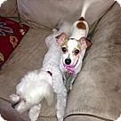 Adopt A Pet :: Gidget