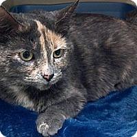 Adopt A Pet :: Calli - Phoenix, AZ
