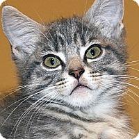 Adopt A Pet :: Lance - Irvine, CA