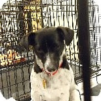 Adopt A Pet :: Kiki - Las Vegas, NV