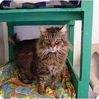 Adopt A Pet :: Tiger - El Cajon, CA