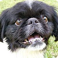 Adopt A Pet :: Oreo - Mocksville, NC