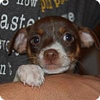 Adopt A Pet :: Hoops - Coral Springs, FL