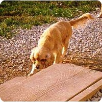 Adopt A Pet :: Cooper - Irvington, KY