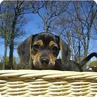 Adopt A Pet :: Austin - Novi, MI