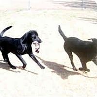 Adopt A Pet :: Watson - Cumming, GA