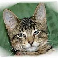 Adopt A Pet :: Simon - Montgomery, IL