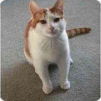 Adopt A Pet :: Tater - Kirkwood, DE