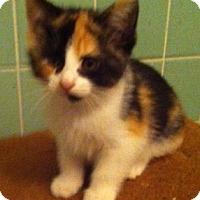 Adopt A Pet :: Roxanne - Cocoa, FL