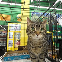 Adopt A Pet :: Emma - West Lafayette, IN