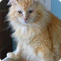 Adopt A Pet :: Leo 14219 - Atlanta, GA