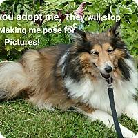 Adopt A Pet :: Kinsi - COLUMBUS, OH