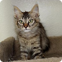 Adopt A Pet :: Spencer - Sacramento, CA