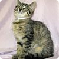 Adopt A Pet :: Dumpling - Powell, OH