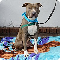 Adopt A Pet :: Willie - Mt Vernon, NY