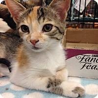 Adopt A Pet :: Renee - Gainesville, FL