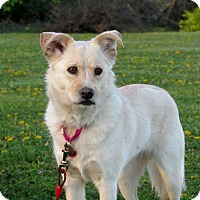 Terrier (Unknown Type, Medium) Mix Dog for adoption in Grinnell, Iowa - Hershey