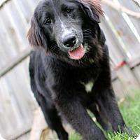 Adopt A Pet :: Hunter - Bloomington, MN