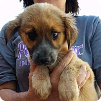 Adopt A Pet :: Charity - E. Greenwhich, RI
