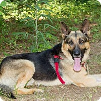 Adopt A Pet :: Blue - Montgomery, AL