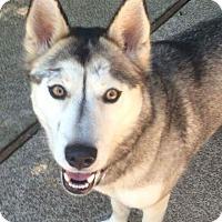 Adopt A Pet :: Tikaani - Meridian, ID
