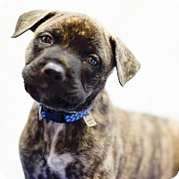 Adopt A Pet :: Slater - Houston, TX