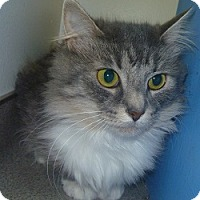 Adopt A Pet :: Peachy - Hamburg, NY