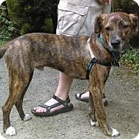 Adopt A Pet :: Towson - Seahurst, WA