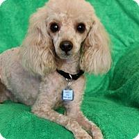 Adopt A Pet :: Maxwell - Wichita, KS