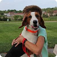 Adopt A Pet :: Lima Bean - Elyria, OH