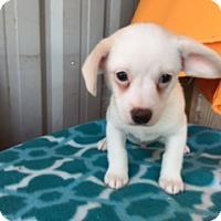 Adopt A Pet :: CHARMING - Elk Grove, CA