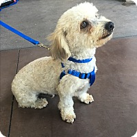 Adopt A Pet :: Nolan - carlsbad, CA
