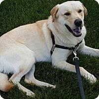 Adopt A Pet :: Funny Bone aka Milo - Rockville, MD