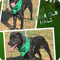 Adopt A Pet :: BARON - Lexington, NC