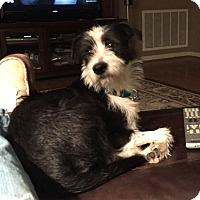 Adopt A Pet :: Felix - Huntsville, AL