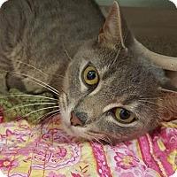 Adopt A Pet :: Mercy - Umatilla, FL