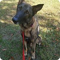 Adopt A Pet :: River II - Louisville, KY