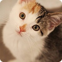 Adopt A Pet :: Jigglypuff - Thornhill, ON