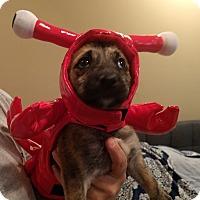 Adopt A Pet :: TALIE - Fishkill, NY